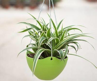 巧用风水植物打造厨房好风水