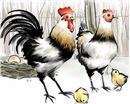 属鸡的生肖婚姻配对