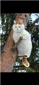 好可爱的小猫猫 我特别喜欢这只小猫猫问题图片预览_神巴巴问答网