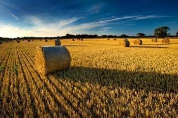 梦见耕种 种田