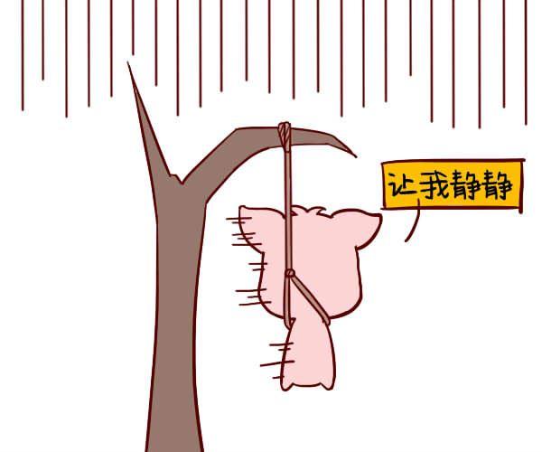 生肖猪本周运势【2018.01.01-01.07】