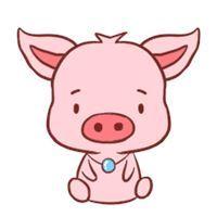 属猪的人今年多少岁了