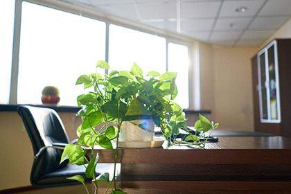 办公室养植物的风水禁忌,原来养这些植物最好!