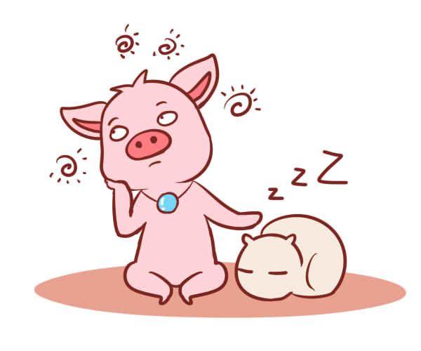 属猪的三合生肖是什么