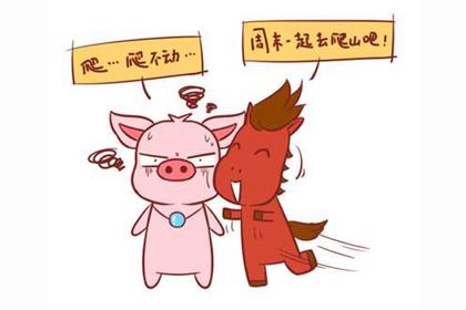 2019年己亥猪年生肖猪每月运势及运程