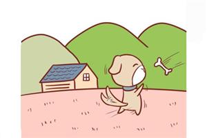 2019年属狗的人爱情运势如何,感情发展顺利吗?