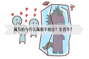 属马的与什么属相不相合?生肖牛?