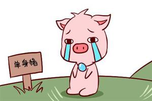 属猪的男人对待感情的态度:憨厚的他很会宠人