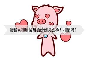 属猪女和属猪男的婚姻怎么样?相配吗?