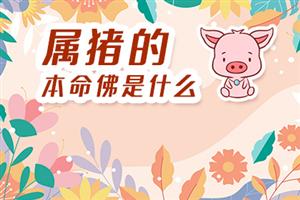 属猪的本命佛是什么