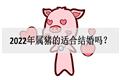 2022年属猪的适合结婚吗?感情运如何