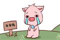 属猪本命年的注意事项,关注人际关系提防小人?