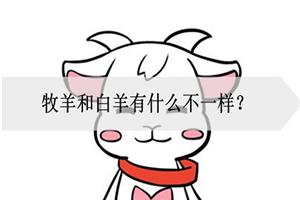 牧羊和白羊有什么不一样?是哪里不一样?